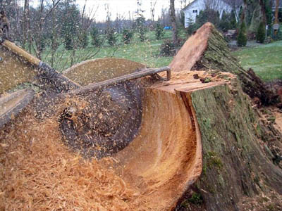 Stump Grinding - Image