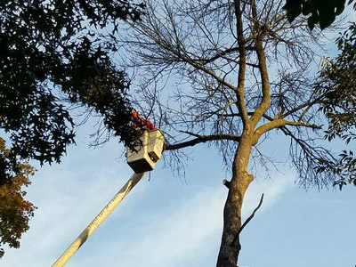 Tree Pruning- Image