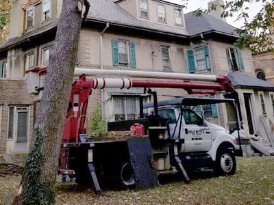 Tree Removal - Image