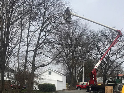 Tree Services - Image