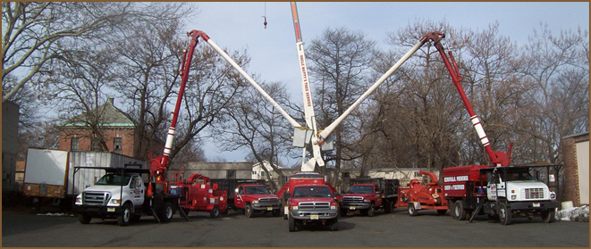 Tree Service West Orange, NJ | Tree Removal West Orange, NJ